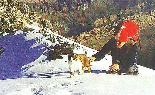 Швейцарский кот-альпинист Томба. Кот, Животные, Альпинизм, Туризм, Горы, Путешествия, Приключения, Длиннопост