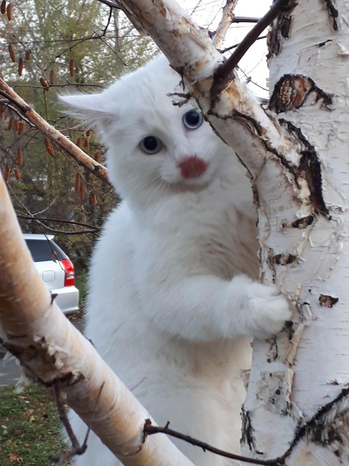 Прекрасная незнакомка! Кот, Шушенское, Длиннопост