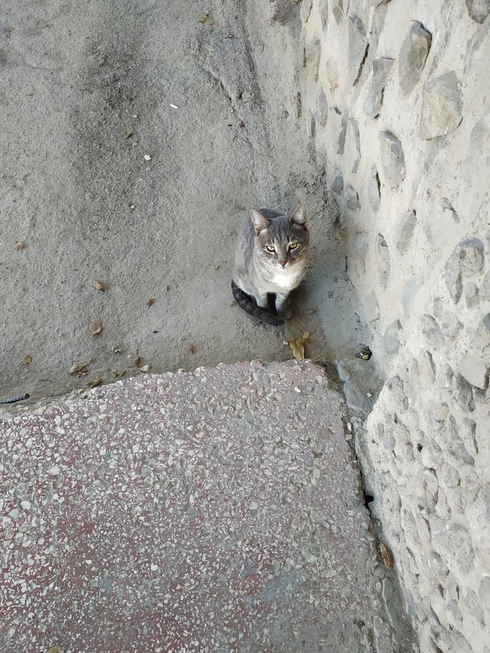 Серый Кот, Серый, Длиннопост