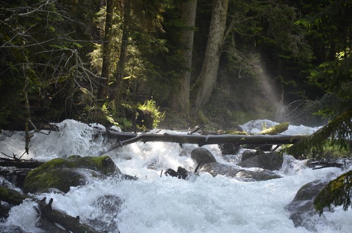 Утро в сосновом лесу Река, Лес, Кавказ, Природа, Красота природы