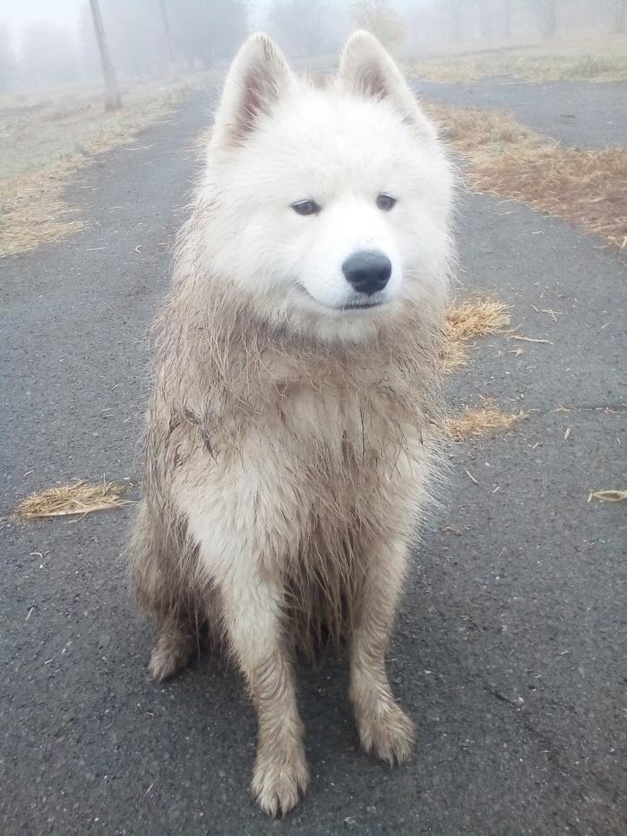 Когда белая собака гуляла в белом тумане