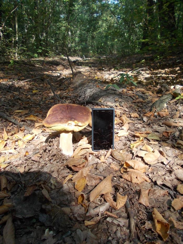 Заголовок поста про грибы Лес, Грибы, На опознание, Осень, Длиннопост