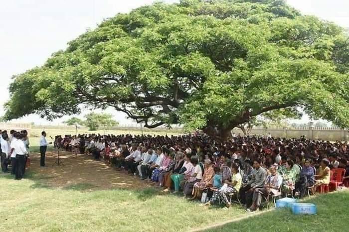 Важность одного дерева