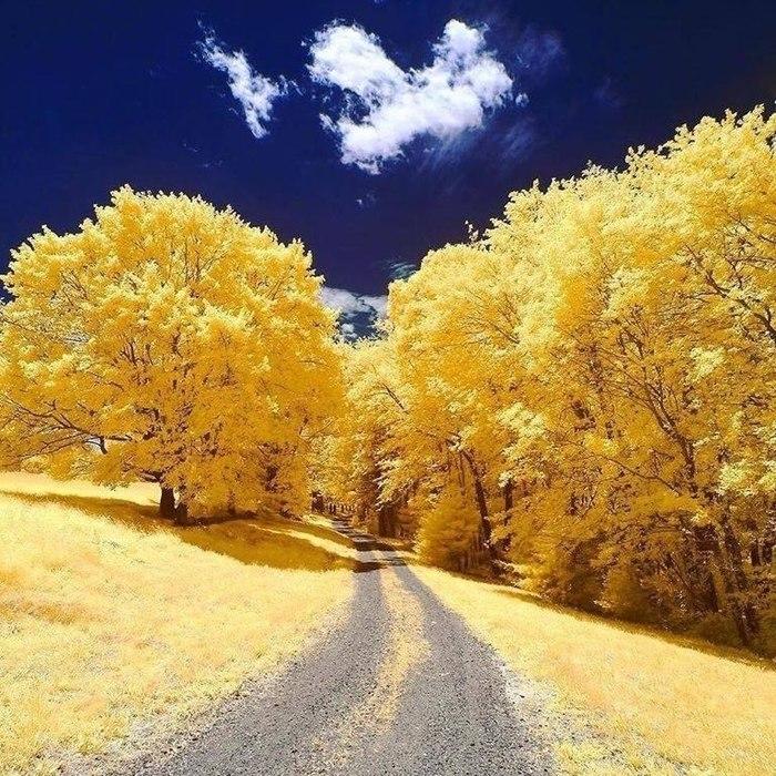 Желтая осень в штатеМассачусетс