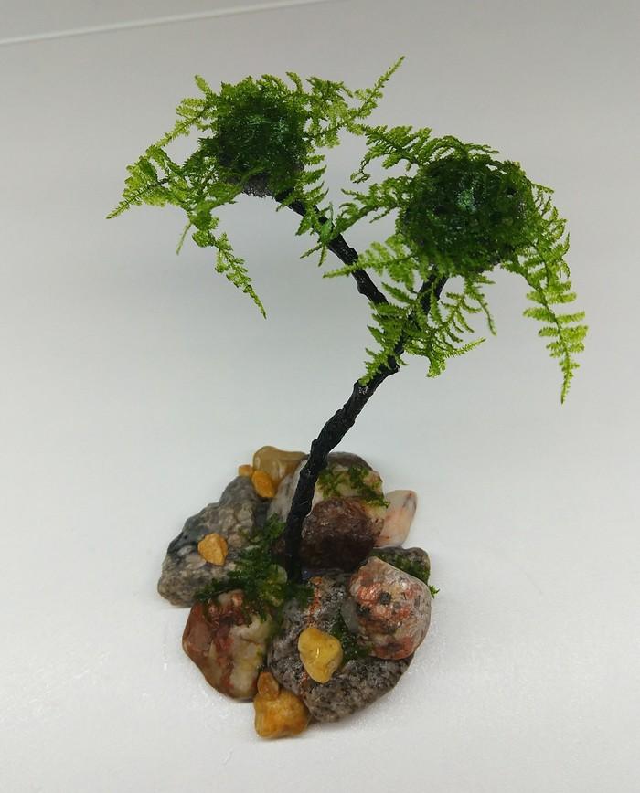 Дерево в аквариум Аквариум, Аквариумистика, Поделки, Мох, Натуральные камни, Длиннопост