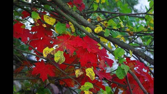 Выборг, Ленинградская область Выборг, Природа, Ленинградская область, Осень, Красота природы, Красота