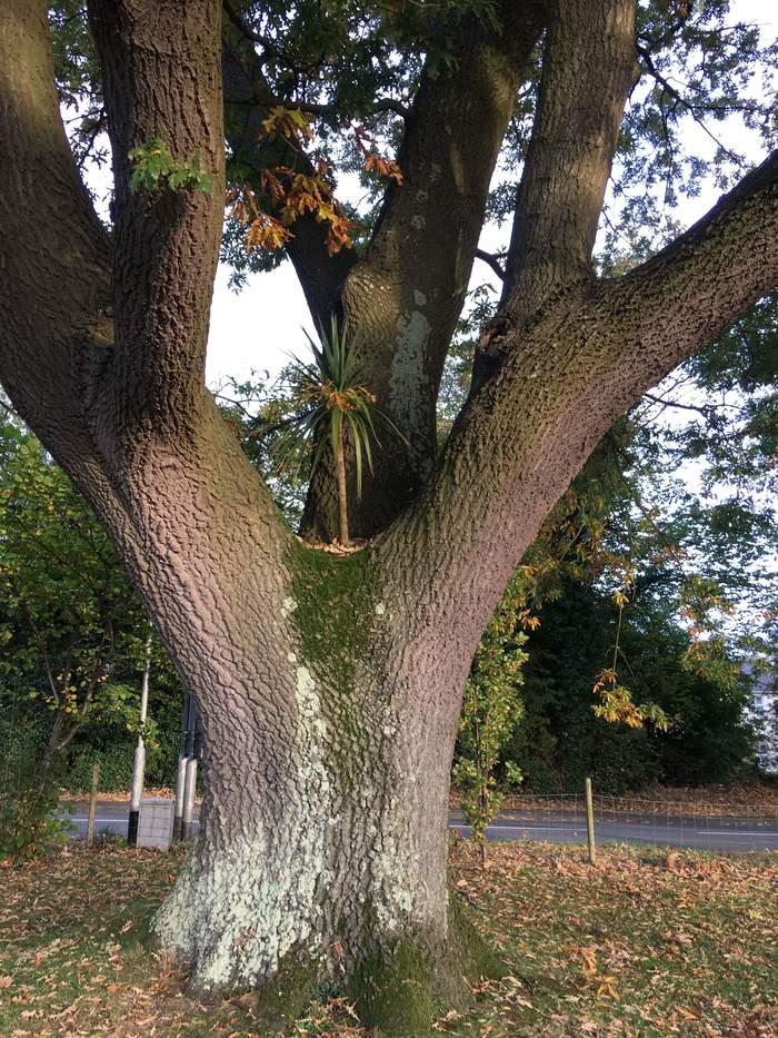 Дерево на дереве. Дерево, Imgur, Фотография