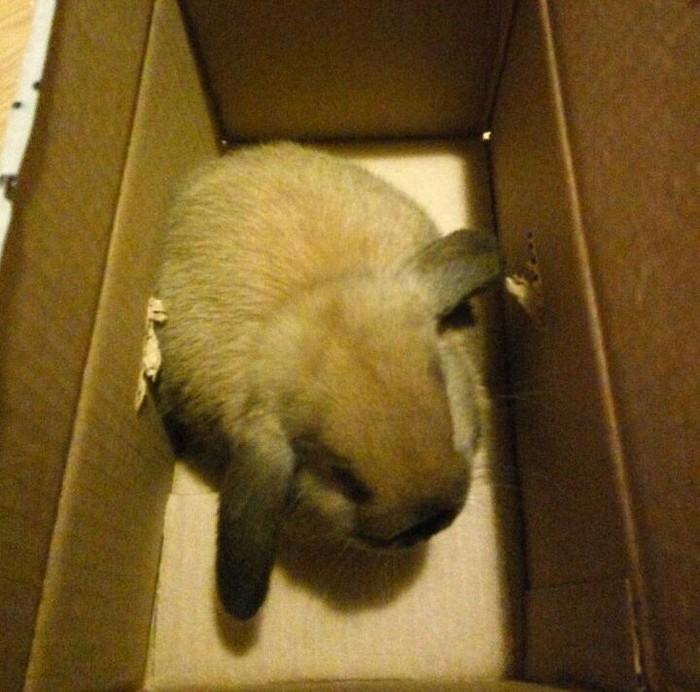 Домашние кролики Кролик, Пушистое мимими, Длиннопост