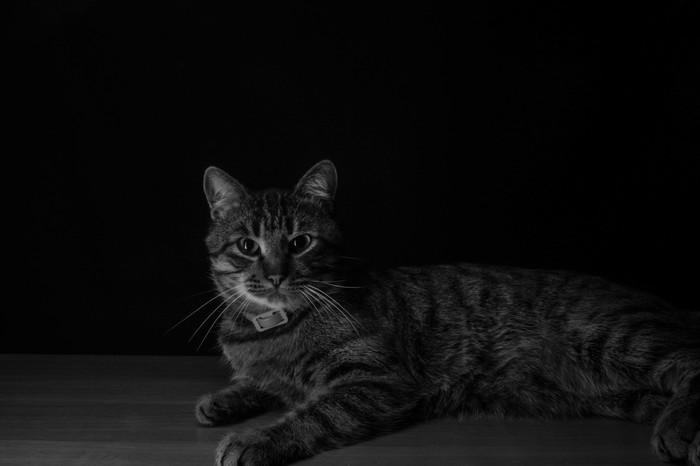 Кот Кот, Фотография, Canon