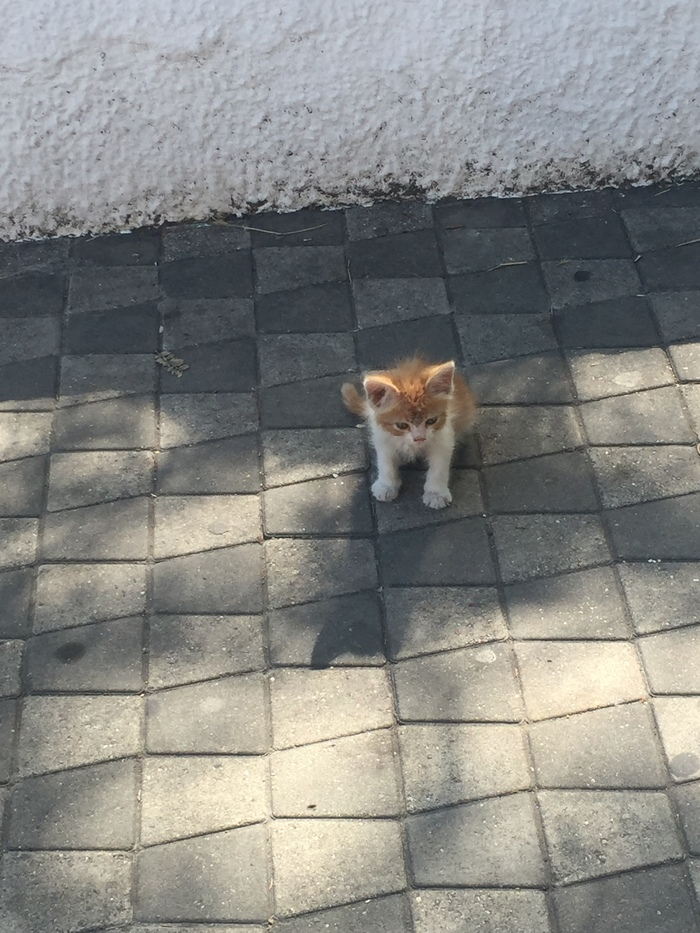 Просто котята. Котята, Котомафия, Фотография, Длиннопост, Кот