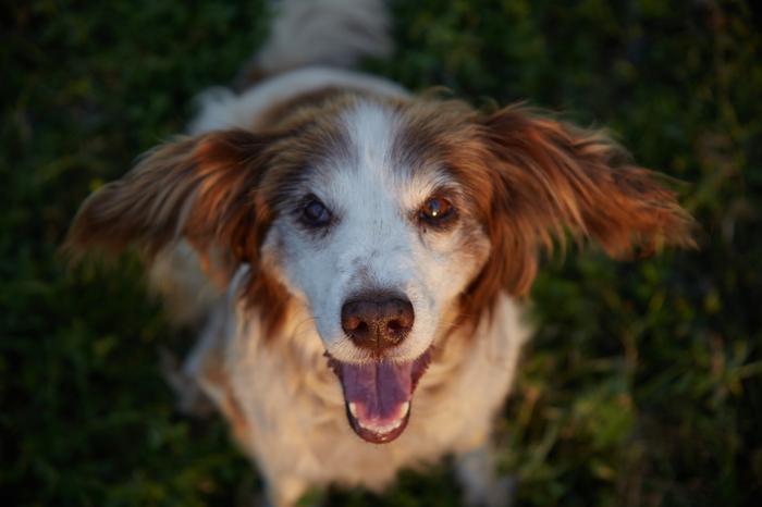 Закатный пёс Начинающий фотограф, Canon, Фотография, Закат, Собака