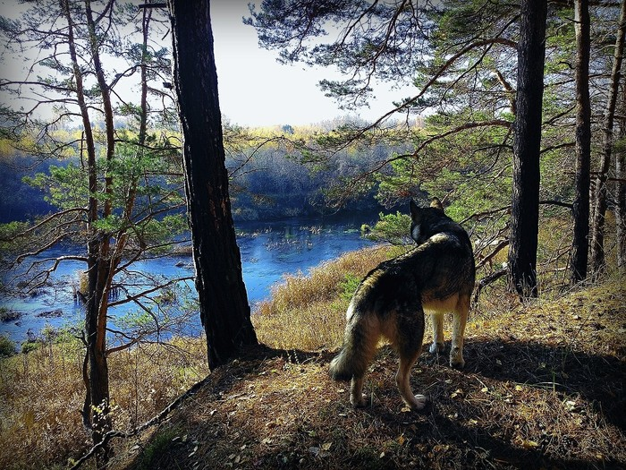 Успели ухватить кусочек теплой осени..) Поход, Нерль, Аляскинский маламут, Длиннопост, Собака