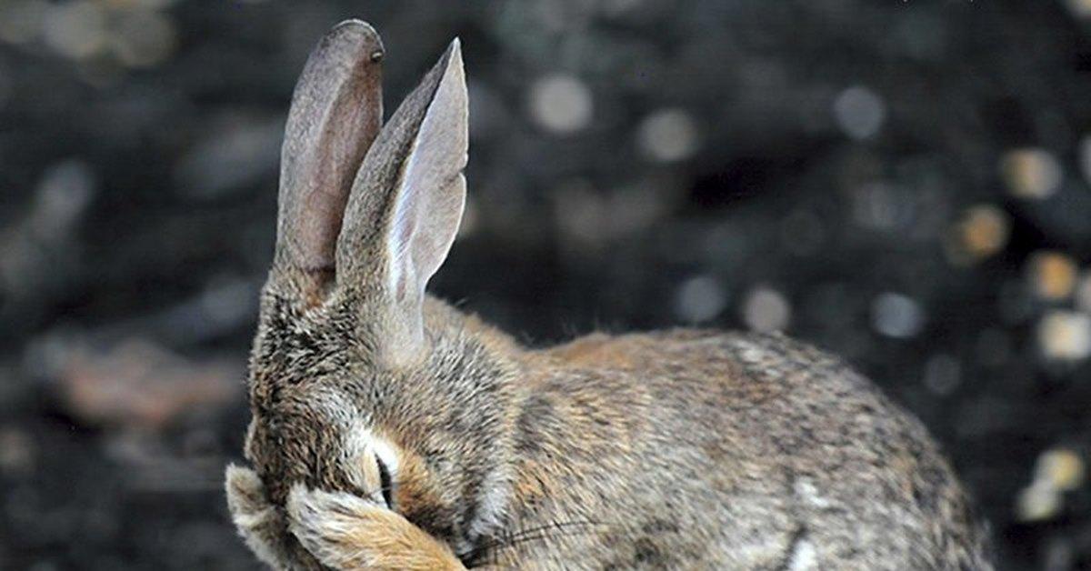 угарная картинка зайца новым