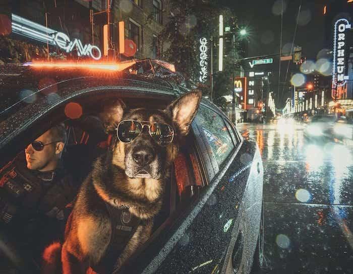 Крутой полицейский пёс из Ванкувера