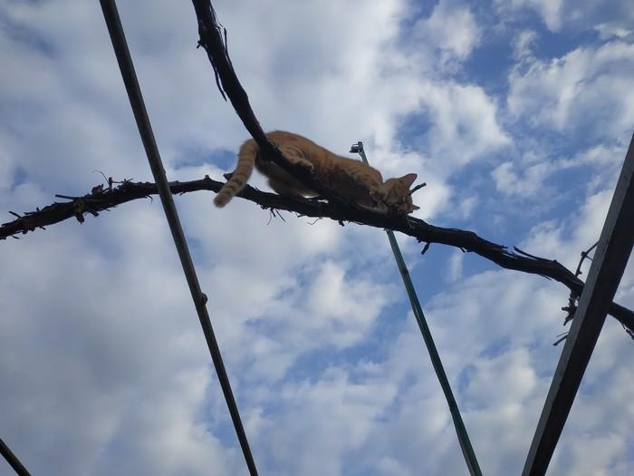Мой кот записался в скалолазы Кот, Собака, Длиннопост