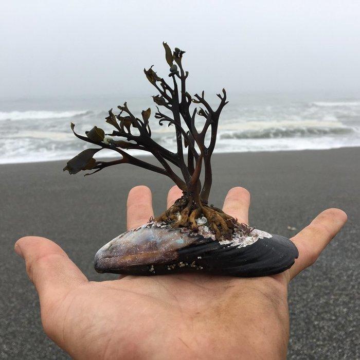 Морской бонсай