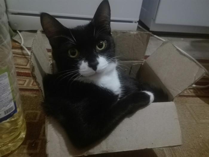 Эй, детка! Кот, Уверенность, Взгляд, Коробка и кот, Фотография