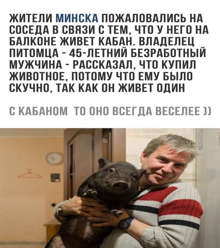 Подложил свинью ВКонтакте, Беларусь, Минск, Новости, Кабан