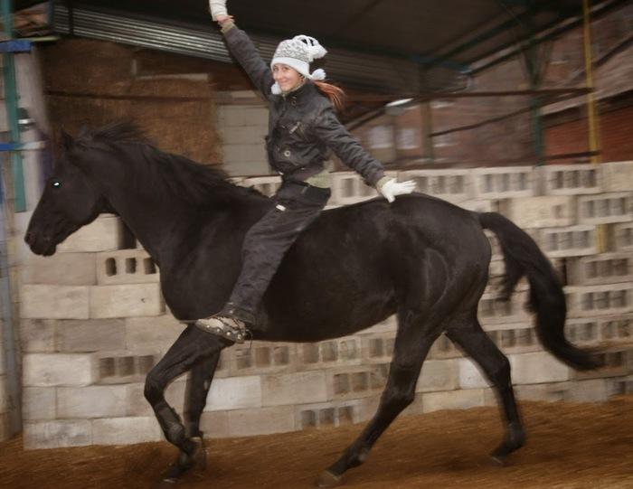 Подготовка лошади к исполнению трюков. С чего начать? Лошадь, Конный спорт, Конкур, Натуральные Отношения, Кони, Верхом, Конные прогулки, Длиннопост