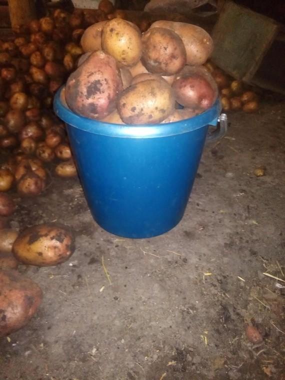 Обман при продаже картофеля на рынке. Картофель, Обман, Нечестный продавец