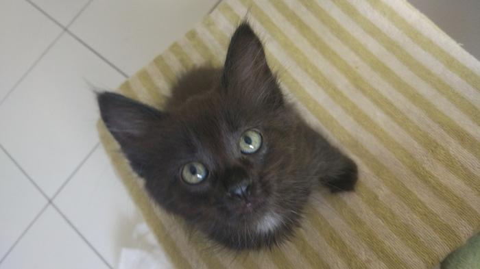 Было и  стало Кот, Черный кот, Котомафия, Было-Стало, Длиннопост