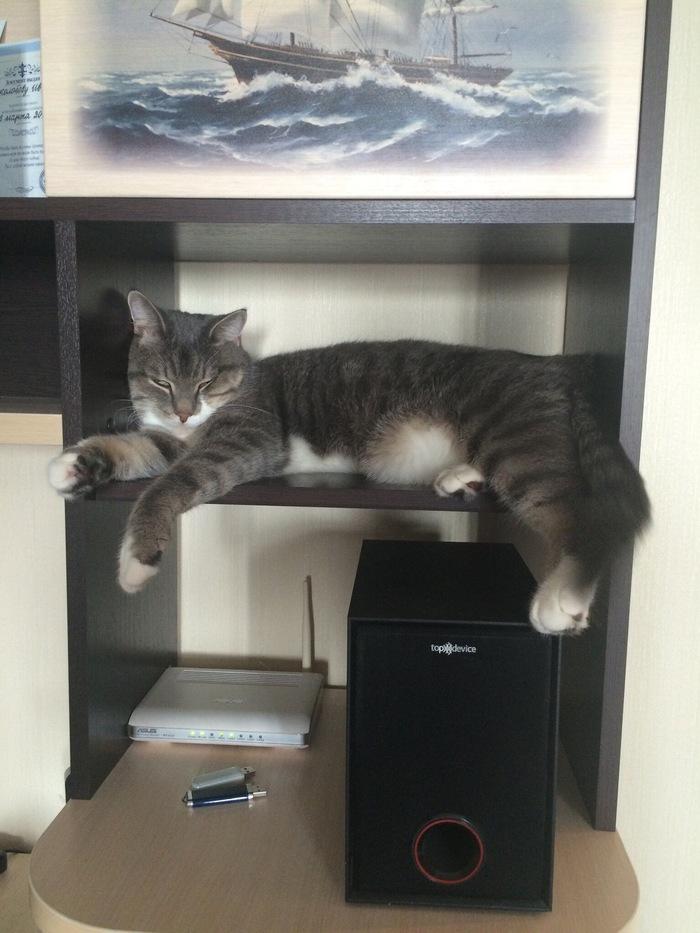 Фото моего любимца Кот, Вырос, Фотография, Длиннопост