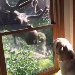 Из леса гость