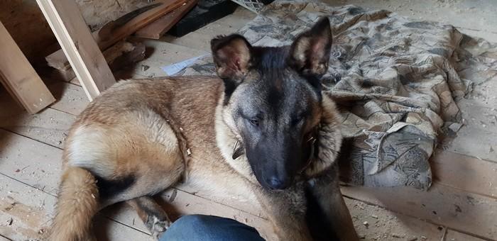 Требуется пристроить пса в добрые руки Москва, Калужская область, Найдена собака, В добрые руки, Собака, Без рейтинга