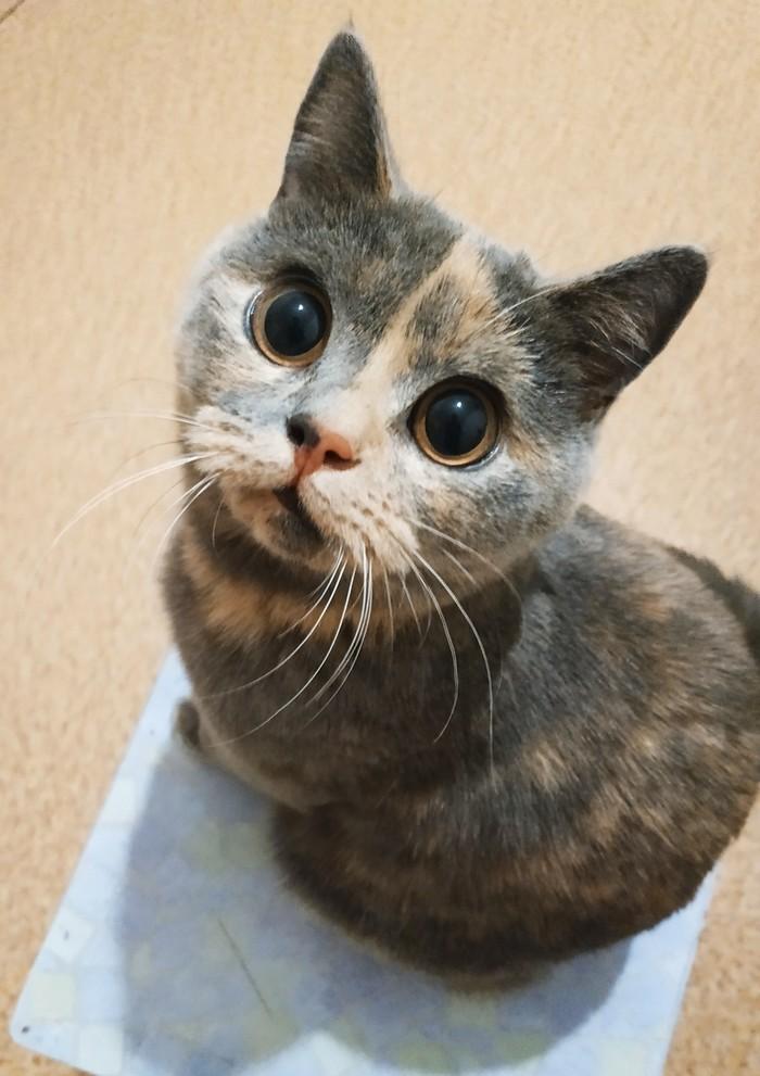 Когда ждёшь вкусняшек Глаза, Кот, Домашние животные