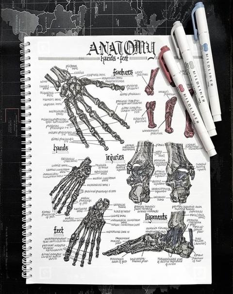 Это всего лишь конспекты по анатомии Медицина, Конспект, Фотография, Длиннопост