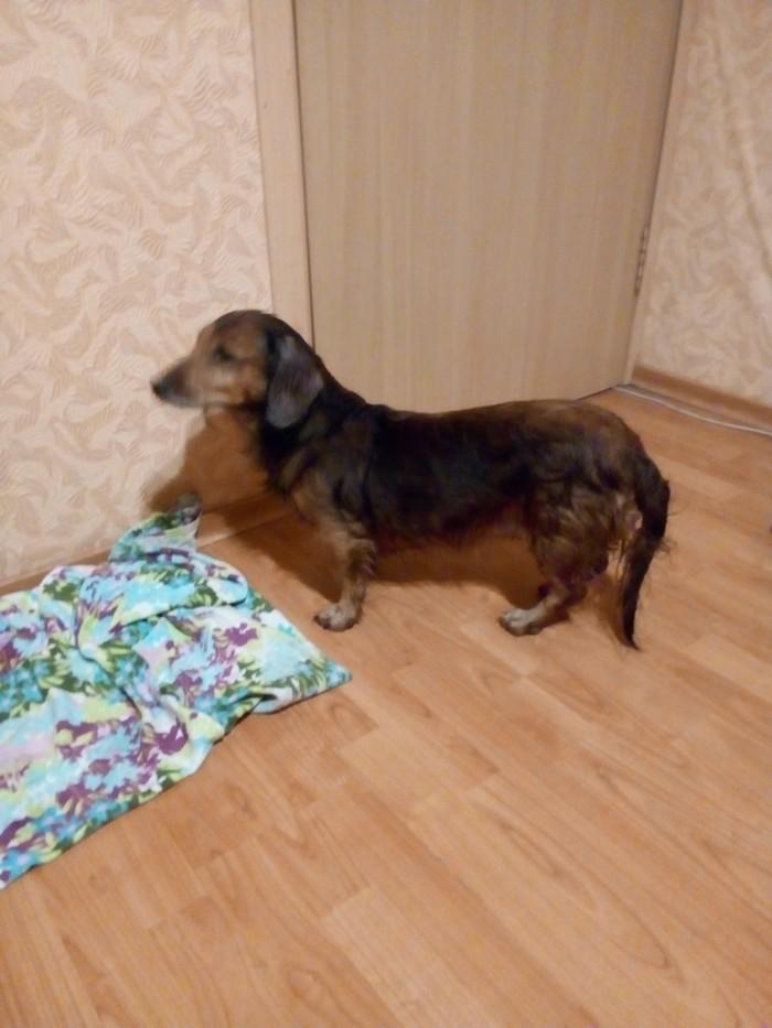 Найдена собачка Потеряшка, Собака, Мытищи, Найдена собака, Без рейтинга
