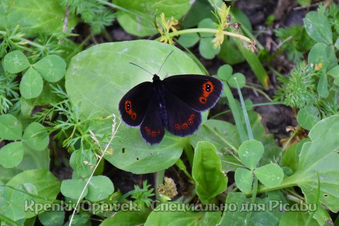 Бабочки. №4 Фотография, Макросъемка, Бабочка, Длиннопост