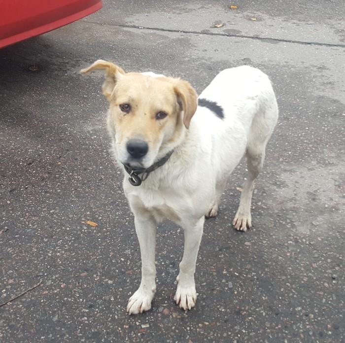 Нашлась собака Без рейтинга, Пропала собака, Найдена собака, Собака, Москва, Печатники, Metro cash & carry
