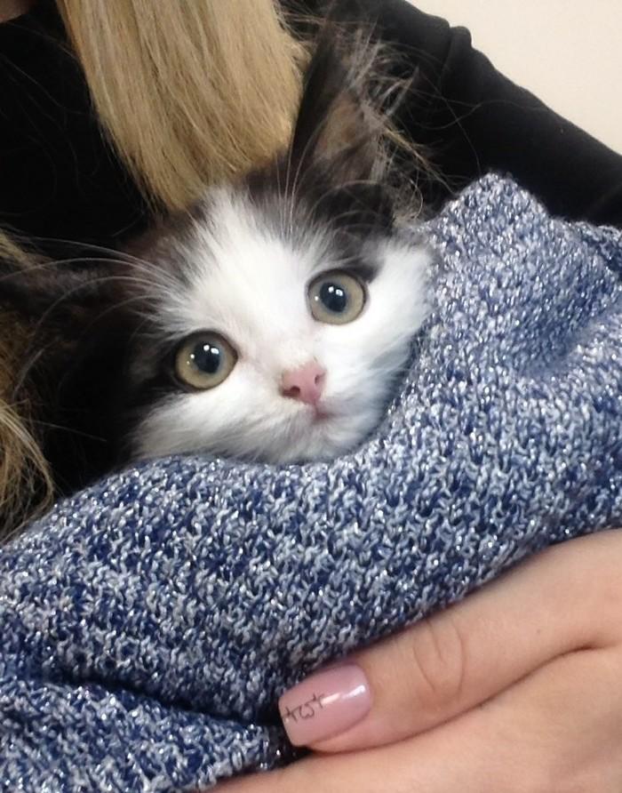 Хуманизация пикабушной кошечки :3 Anime Art, Не аниме, Хуманизация, Котомафия, Длиннопост, Милота, SAI, Неко