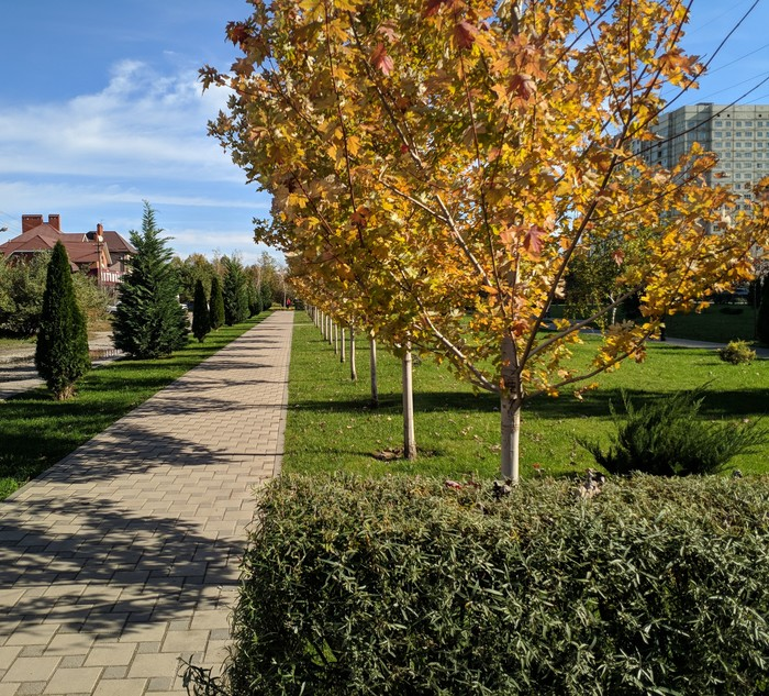 Теплая южная осень Краснодар, Фотография, Осень, Длиннопост