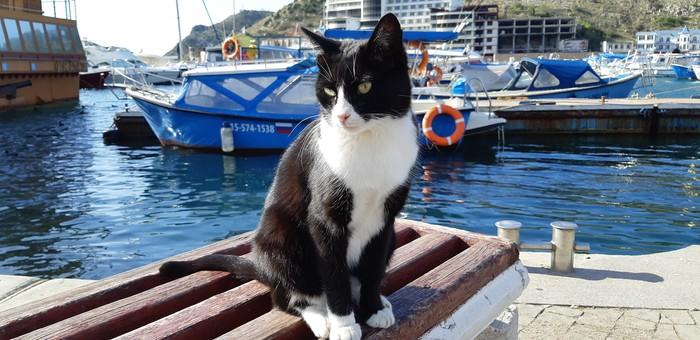 Солнечный привет от Балаклавских котов:)) Балаклава, Севастополь, Кот, Море, Солнце