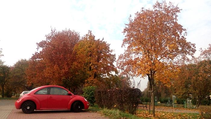 Несколько осенних фотографий Польша, Длиннопост, Жизнь, Осень, Фотография, Октябрь