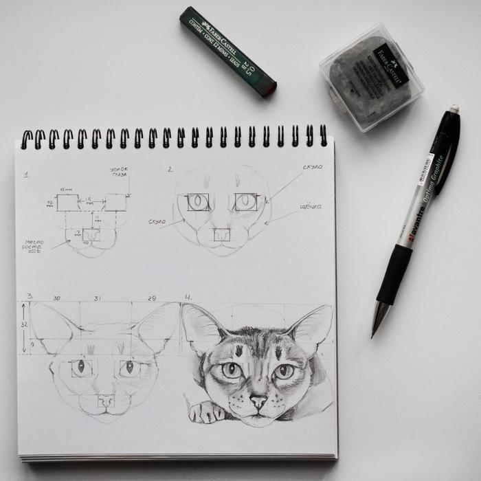 Как нарисовать кота. Кот, Пошаговые инструкции, Учусь рисовать, Животные, Портрет, Длиннопост, Туториал
