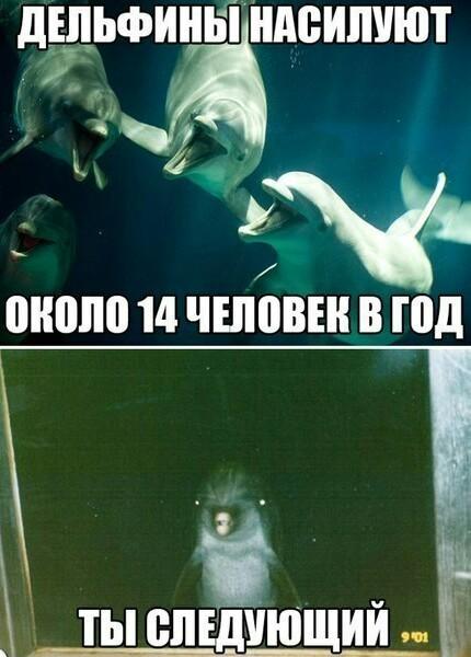 Береги свою жепь Дельфин, Почти клубничка, Мат