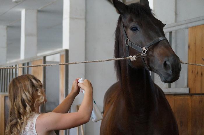 Организационные вопросы конной фотосессии. Для фотографов. Кони, Лошадь, Фотосессия, Модели, Фотограф, Длиннопост