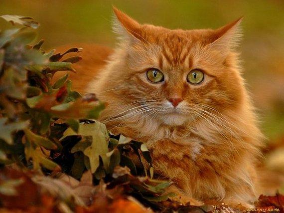Осенние коты. Кот, Котомафия, Осень, Фотография