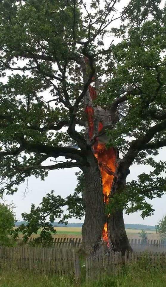 Картинка молния попала в дерево