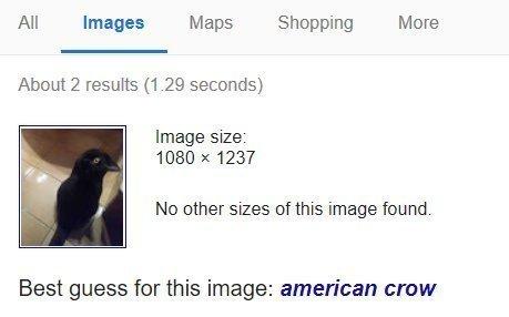 Показалось Google, Показалось, Ворон, Кот