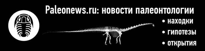 Находка черепа доисторического кита помогла ученым уточнить теории о переходе китов к питанию планктоном Кит, Эволюция, Наука, Палеонтология, Открытие, Животные, Биология, Палеоновости, Длиннопост