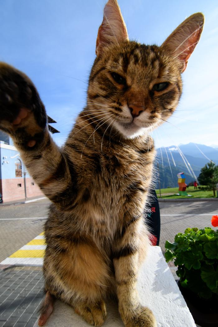 Котик с Красной поляны Сочи, Красная поляна, Кот