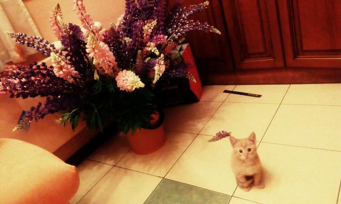 Рыжий шкодник Кот, Цветы, Шкодник