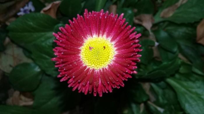 Взгляд Цветы, Осень