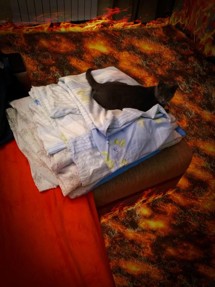 Кошка друга боится спрыгивать с кровати (пол это лава) Кот, Лава, Кровать, Фотошоп мастер