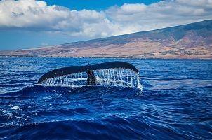 Спасти кита… Кит, Спасение животных, Помощь животным, Видео, Длиннопост