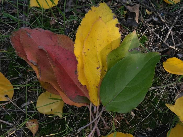 Яркие краски осени Осень, Природа, Градиент, Село, Красота природы, Осенние листья, Сад, Садоводство, Длиннопост